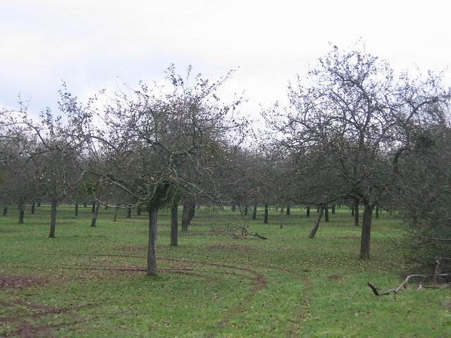 Orchard, Westbrook