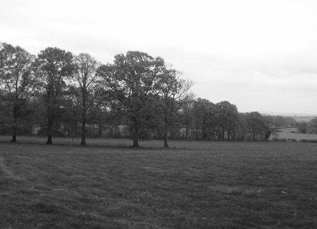 Grassland, Cinders.