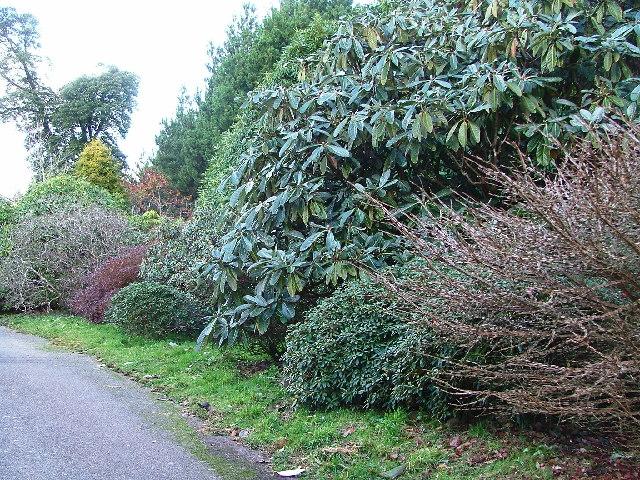 Burncoose Gardens, nr Gwennap