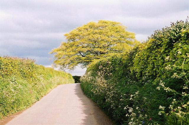 Dulverton: lane near Old Bury