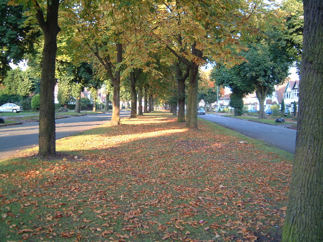 Highfield Road, Hall Green