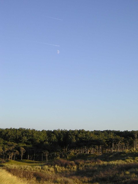 Pine Forest, Formby
