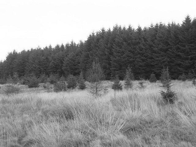 Camilty Plantation.