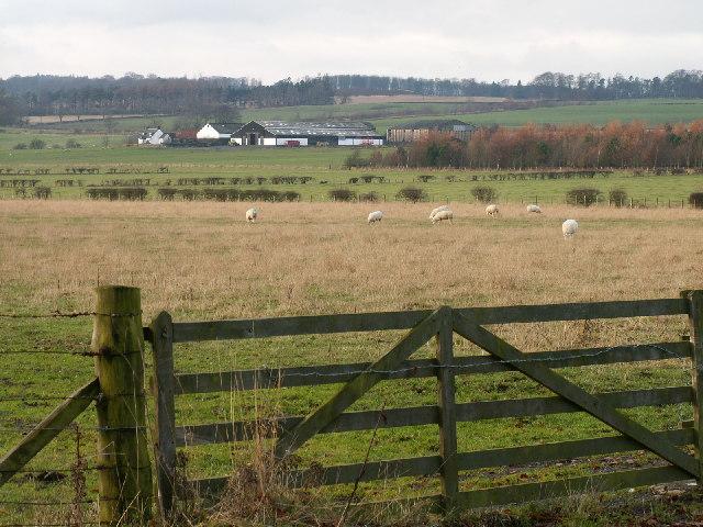 Between Annfield and Branxton farms