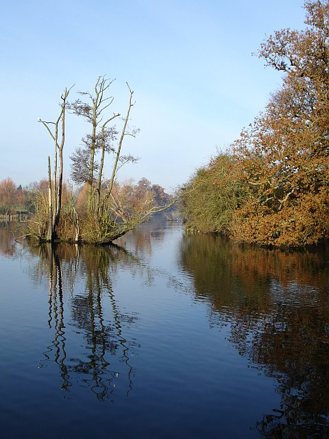 Island in Mote Park lake