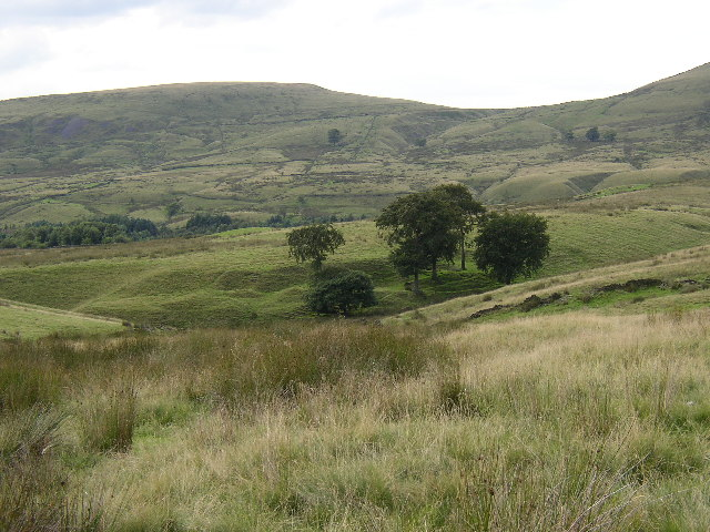 Group of trees near Watergrove Reservoir, Wardle