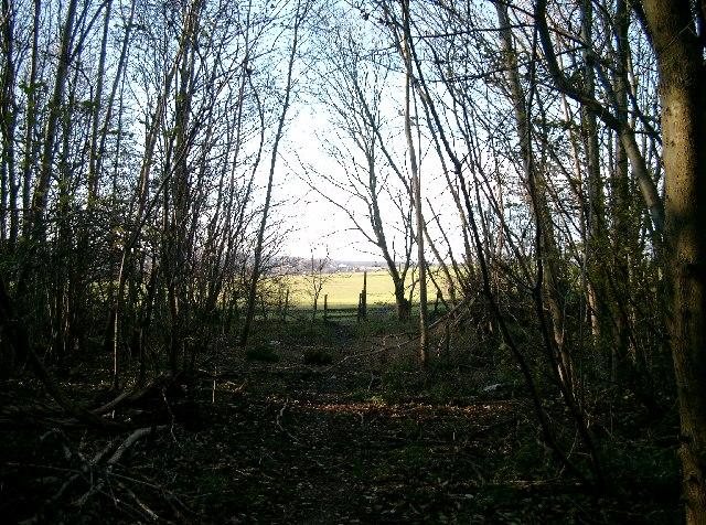 Hayton Wood