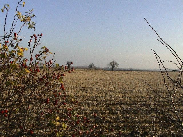 Farmland near Canwick