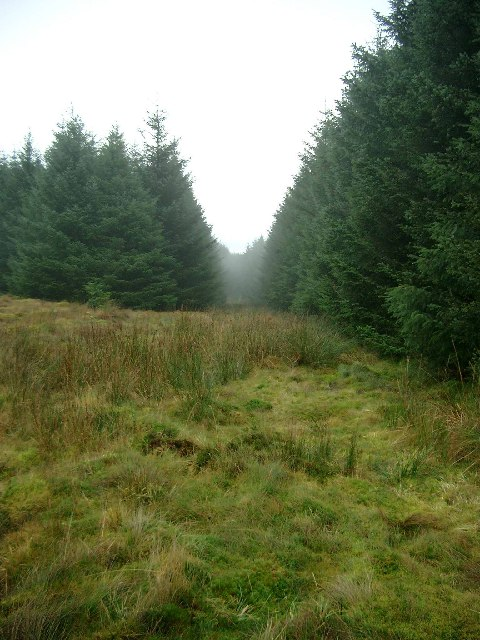 Rough path through the Whitelee Forest to High Overmuir farm
