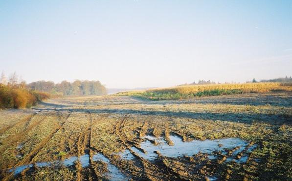 Maize field near Springfield Farm