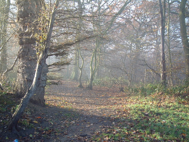 Haste Hill Wood