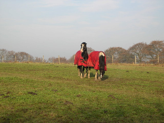 Horses In Field - Whiteley Cottages