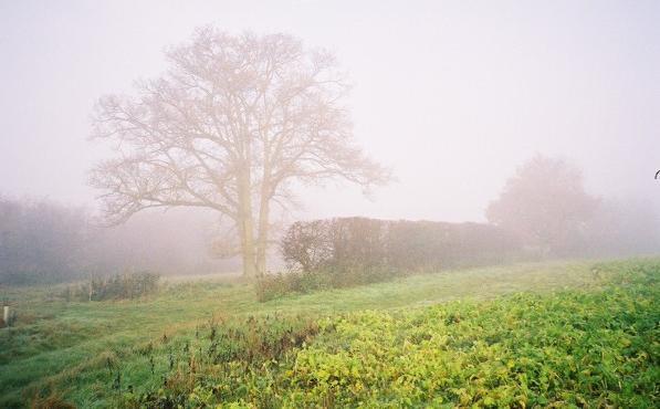 Misty farmland near Hook's Farm