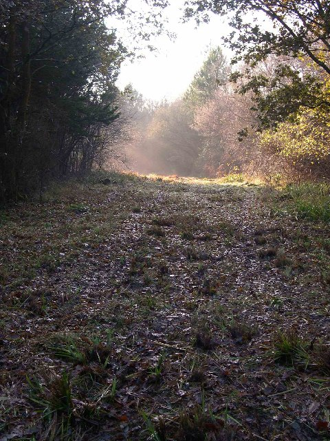Afternoon Mist in Botley Woods
