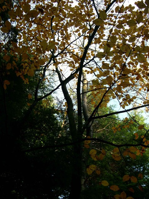 Autumn Tree colour in Botley Wood