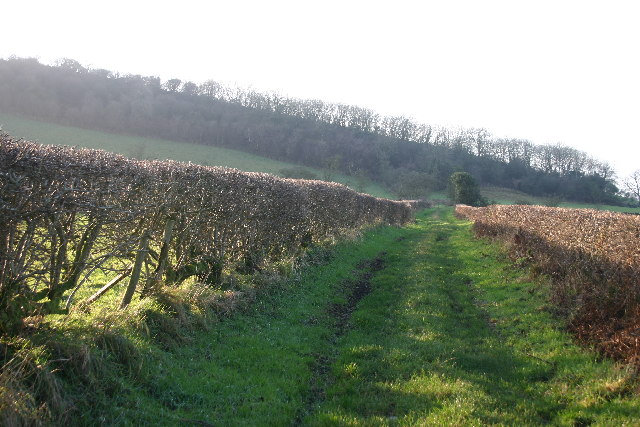 Track to Borrowscale Wood