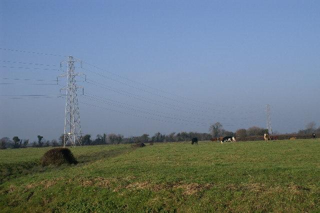 Cows & Pylons
