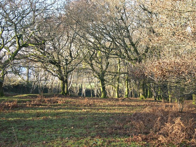 Woodland on the edge of Roborough Down