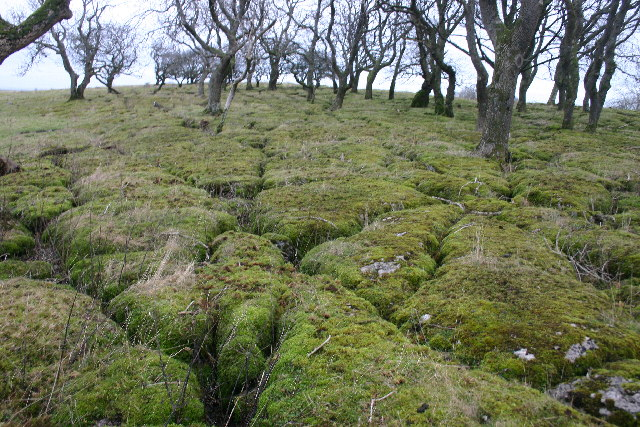 Mossy Clints