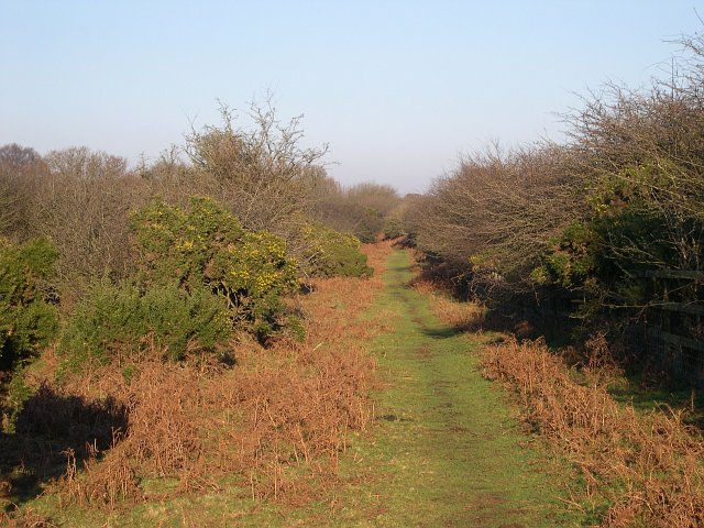 Footpath by the A386 on Roborough Down