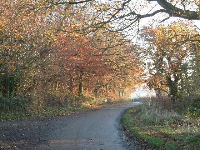 Buckland Wood by Leyland's Farm