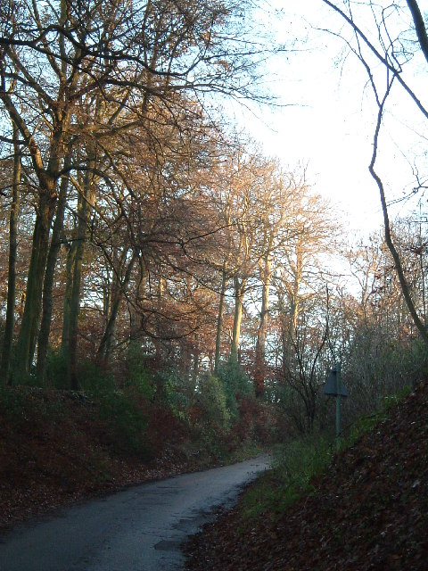 Looking uphill from near The Crong