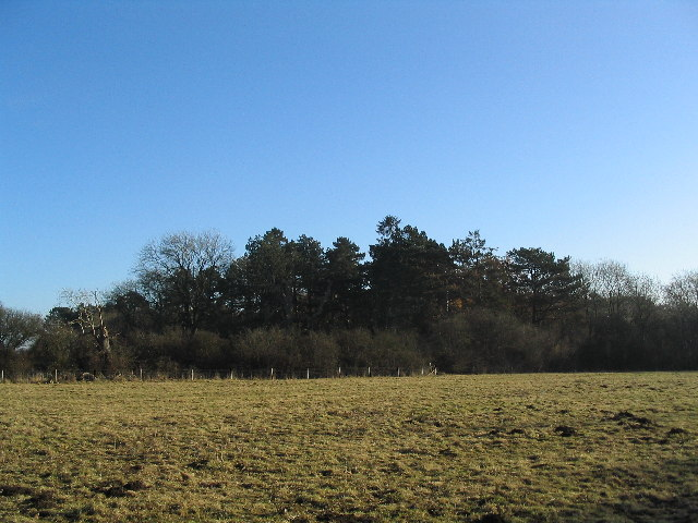 Wymondham Rough, SSSI