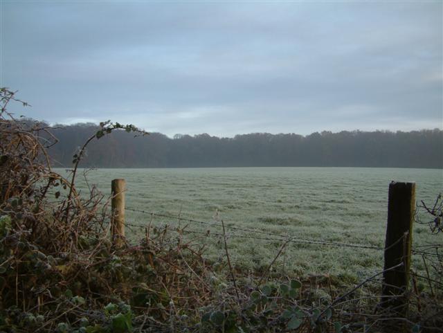 Millbank Wood from Bockmer Lane