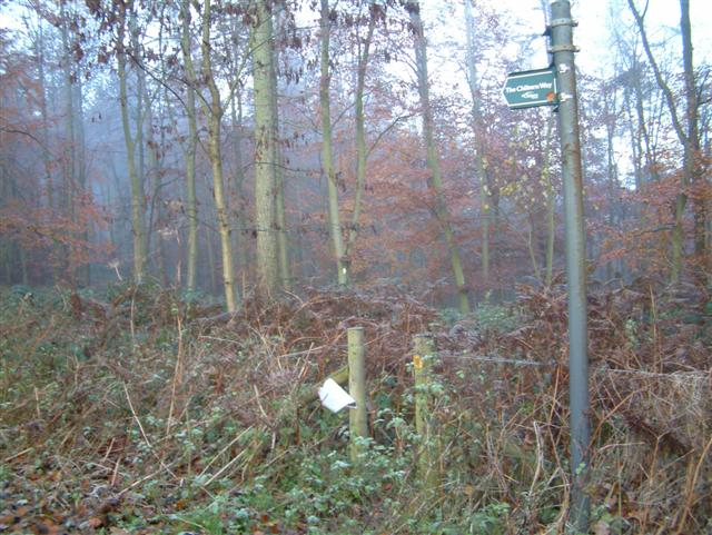 The Chiltern Way through Heath Wood