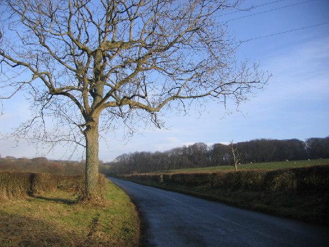 Lone tree road.