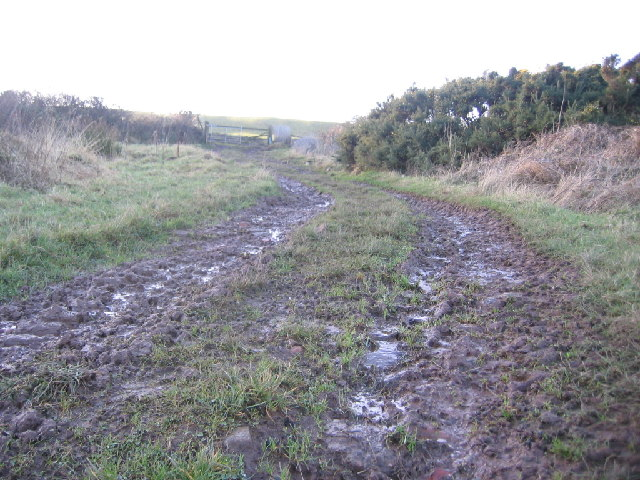 Sandy wet mud lane.