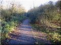 TL4161 : Washpit Road, Girton, Cambs by Rodney Burton