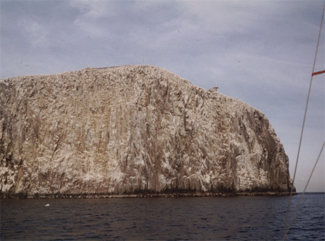 Bass Rock - eastern side