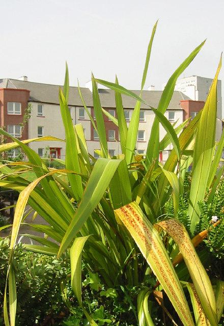 New flats in Craigmillar