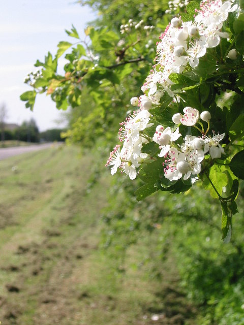 Hedgerow boundary
