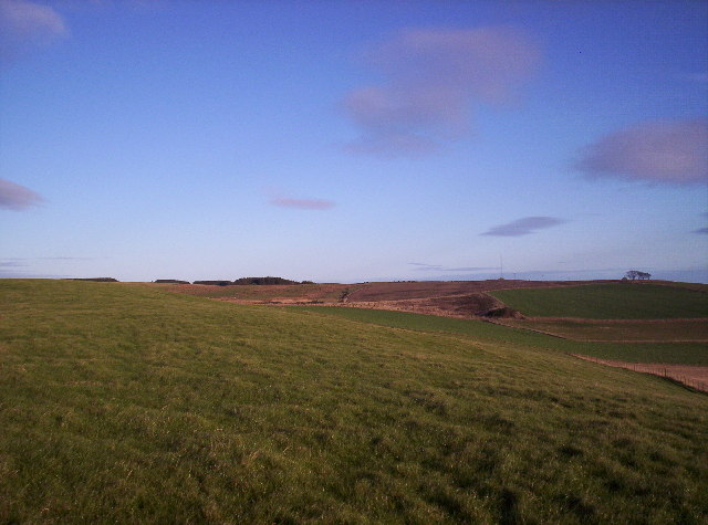 Fields, Phonemast and Woodland