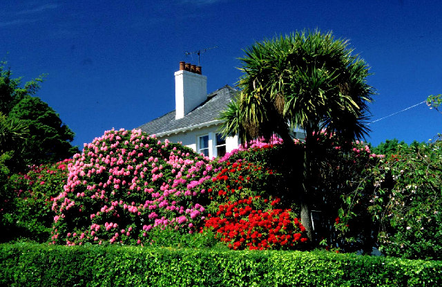 House with rhododendrons and NZ cabbage tree.