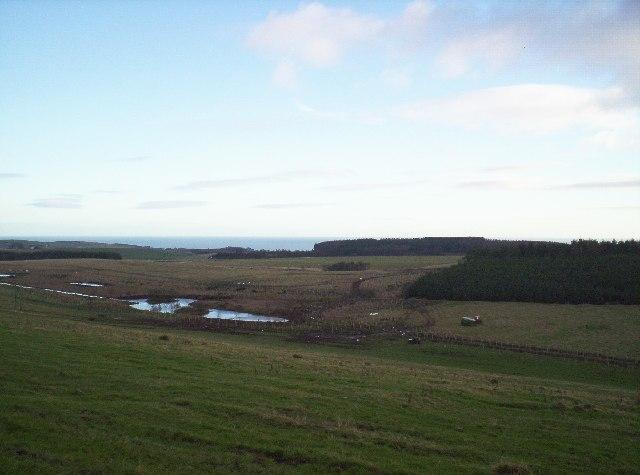 Lochans and Brandshill Woods