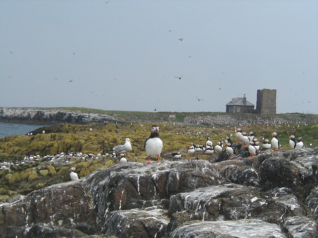 Staple Island, with Brownsman behind