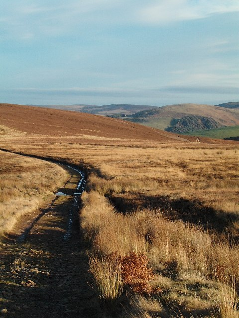 Track to Lammer Law