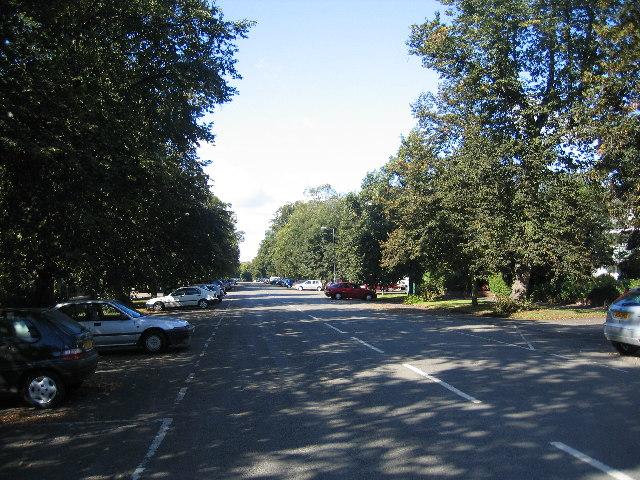 Binswood Avenue in the sun