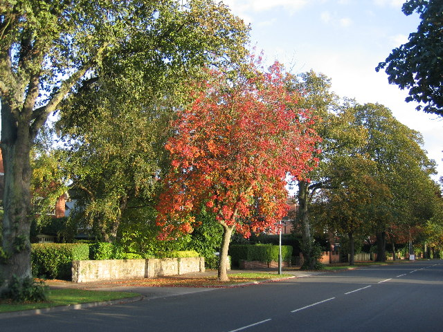 Autumn in Northumberland Avenue