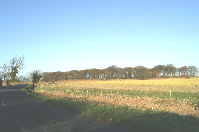 Lydiate Wood