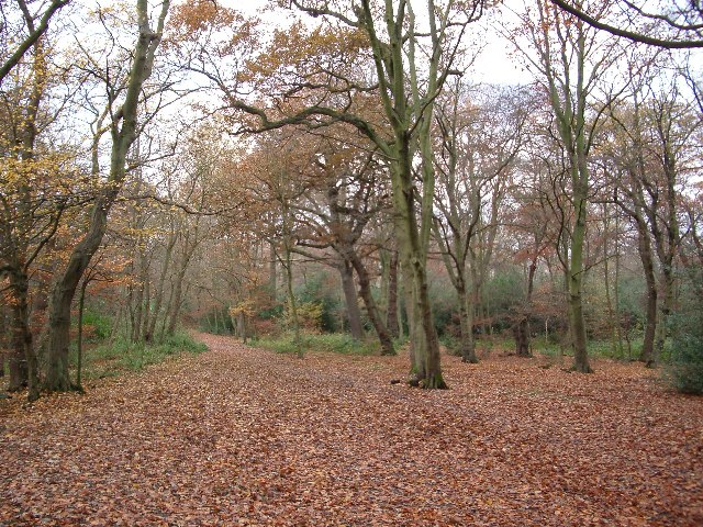 Knighton Wood in winter