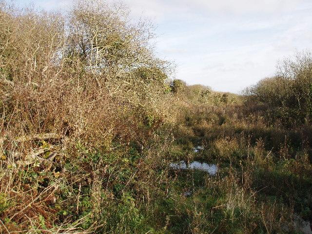 Scrubby, marshy woodland near Bosistow