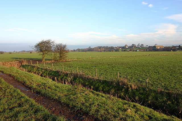 Thurnham fields