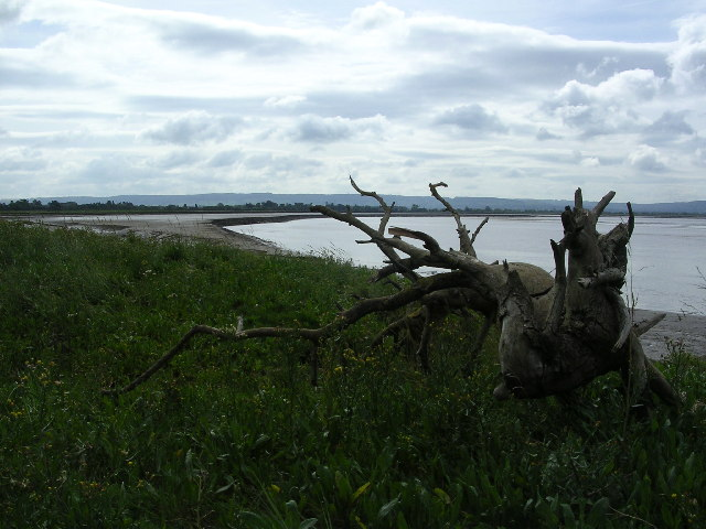 Severn Estuary shoreline including Saul Warth