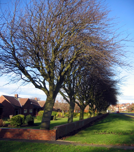 Bedlington, houses and trees