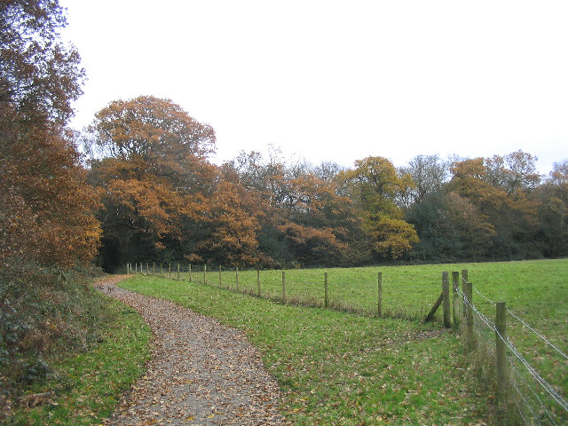 Wild Wood Trail, Hainault Forest