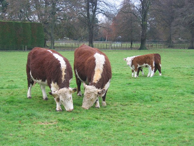 Herefords, The Park, Ashford Carbonel.